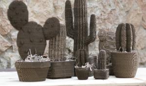 cacti plants-01