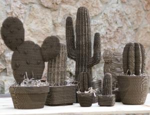 cacti plants-02