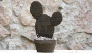 cacti plants2-01