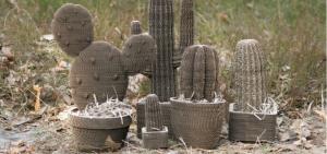 kaktusyLAS-01